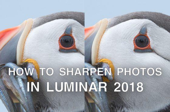 sharpen-luminar-2018