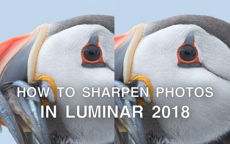 How to Sharpen Photos in Luminar 2018 & Luminar 3 | Nature TTL