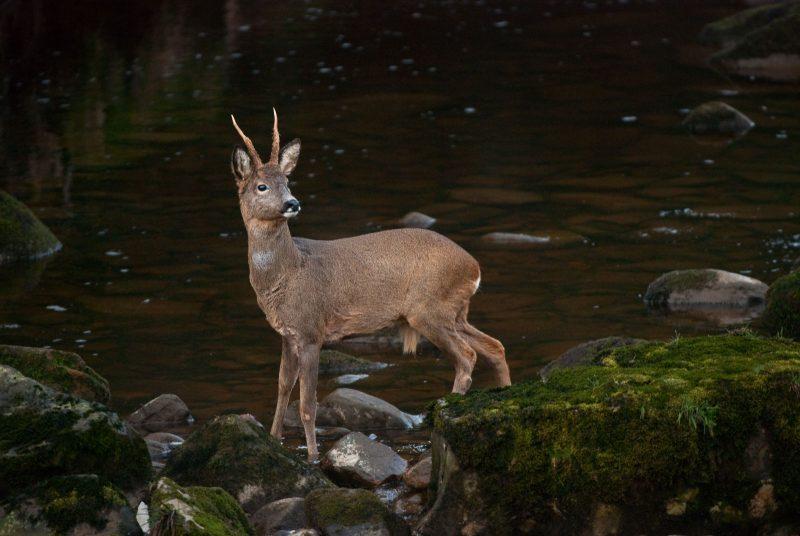 wildlife photography beginner guide