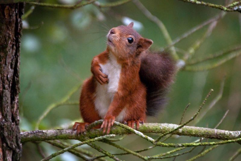 beginner wildlife photography guide