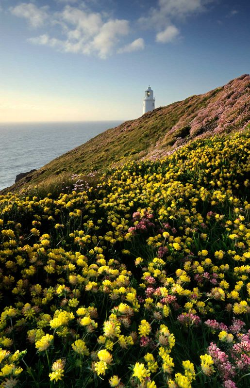 include flowers in landscape photos