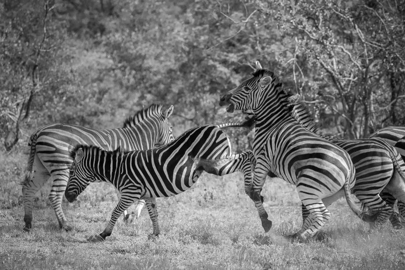conservation photography south africa