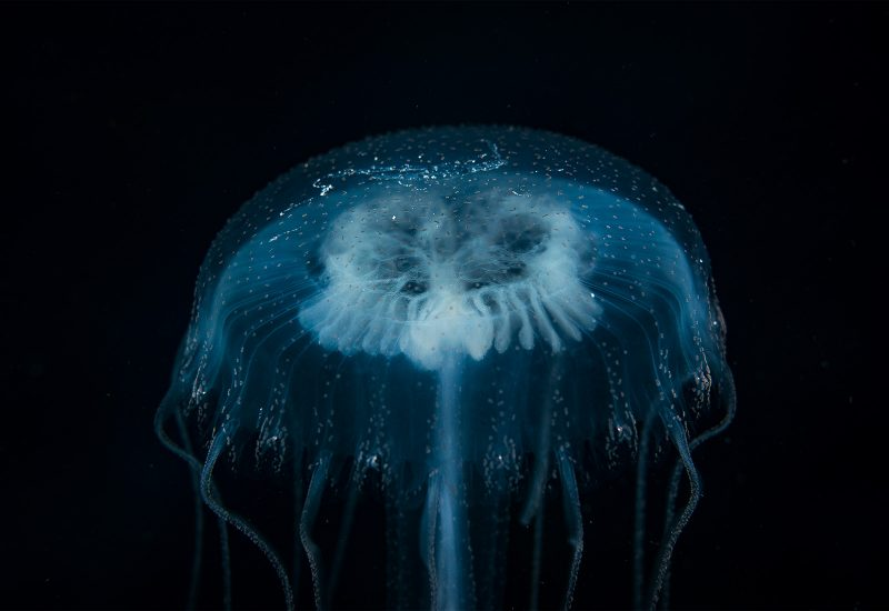 underwater lighting tutorial
