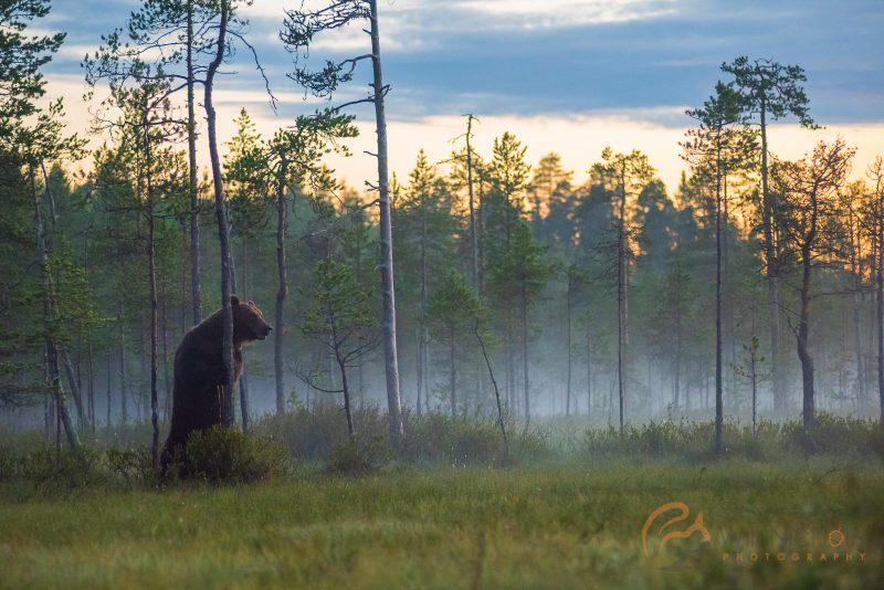 tips for approaching wildlife fieldcraft