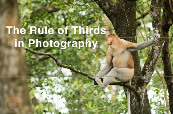 rule-of-thirds-photography-lead