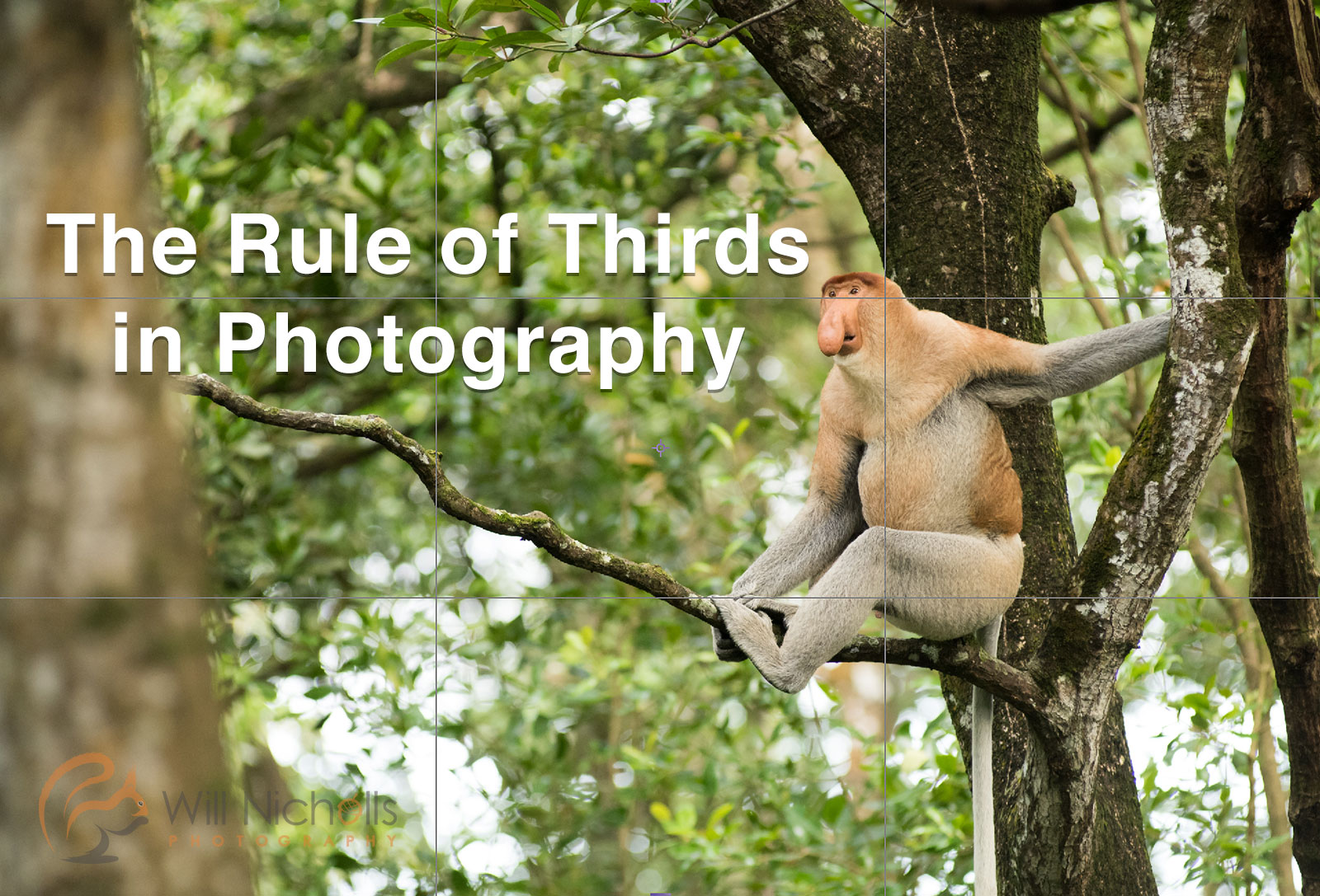 Rule Of Thirds In Photography Composition Tips Nature Ttl