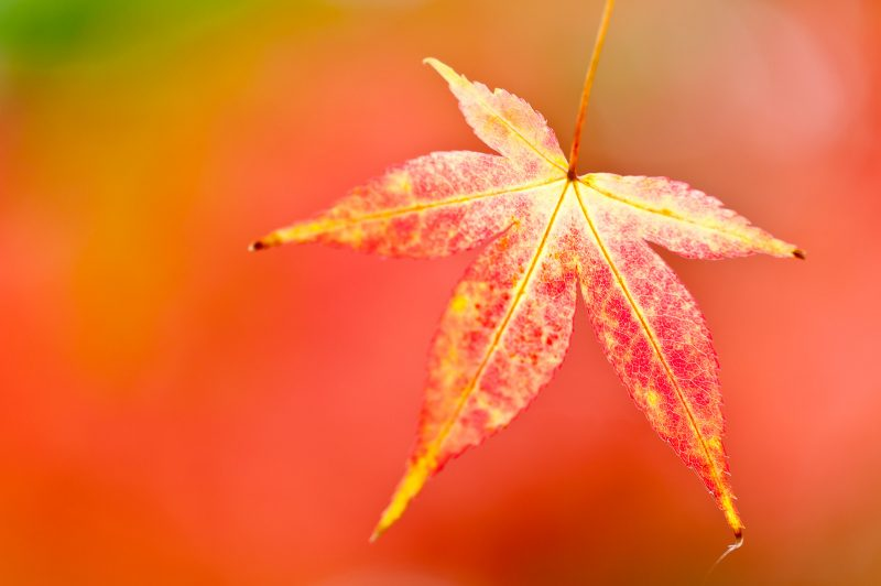 How to photograph autumn close ups