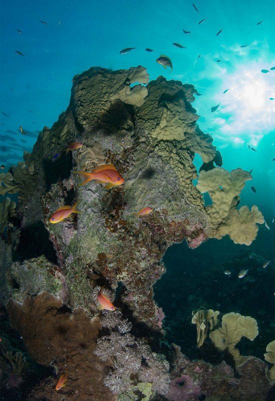 Avoiding backscatter in underwater photos
