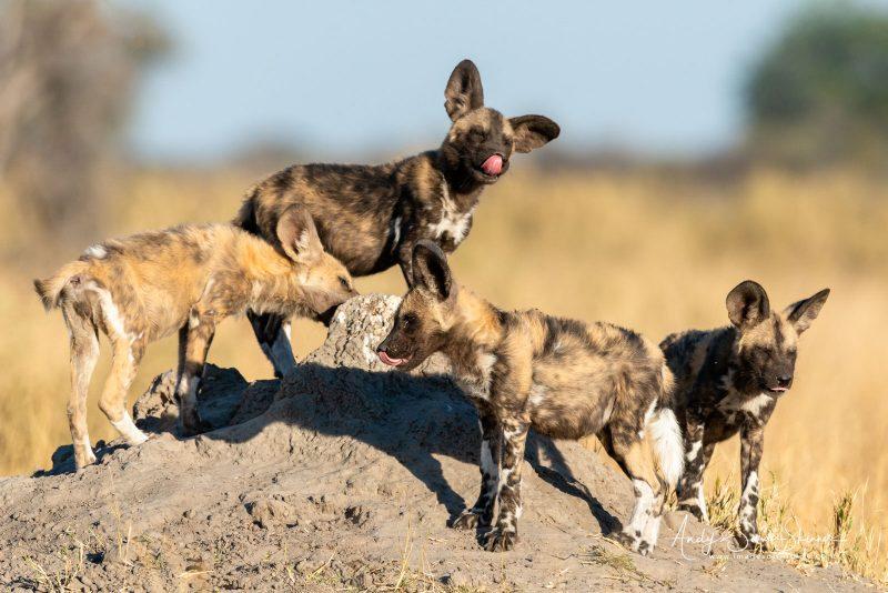 Botswana photography safari