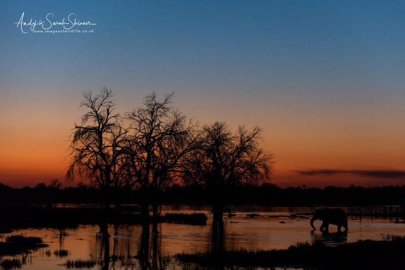 Botswana wildlife photography safari