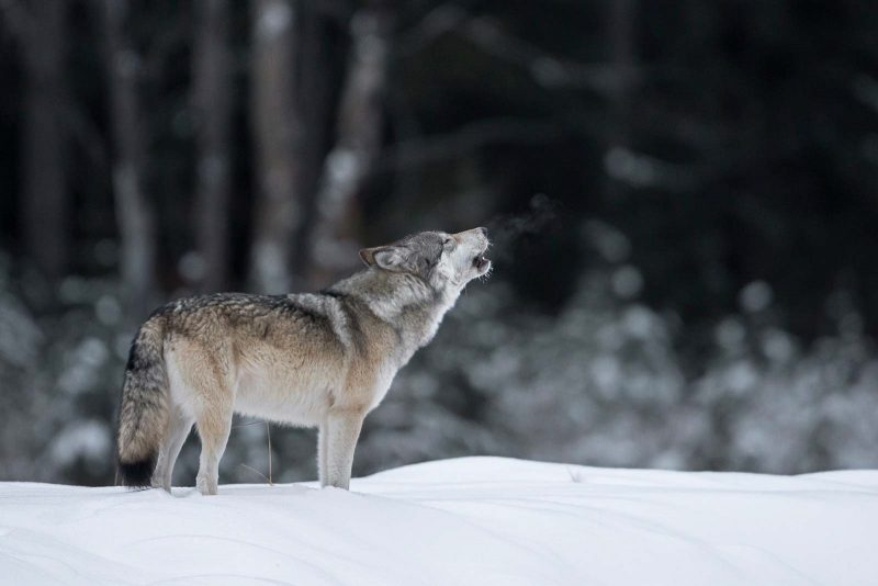 Photographing Wildlife in the winter snow