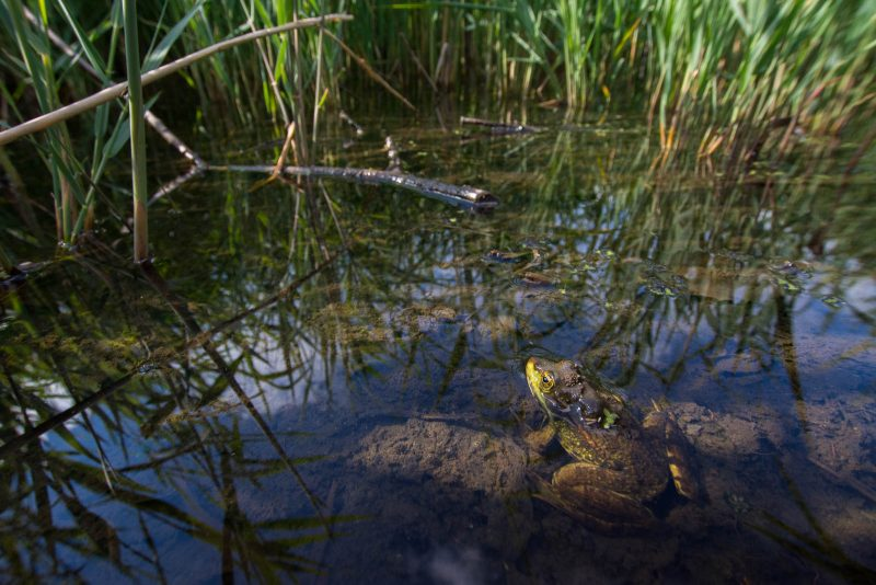 How to Photograph Wildlife in Nature Reserves
