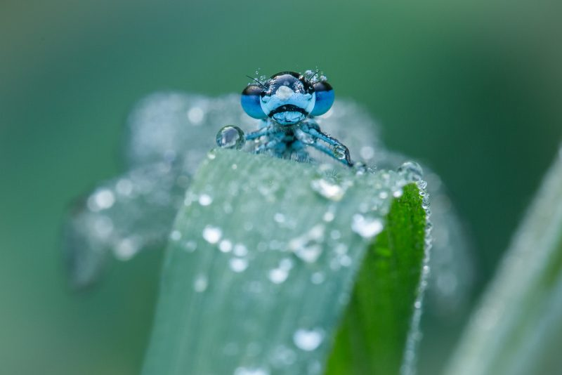 How to take macro photographs