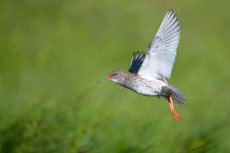 tips photographing wading birds