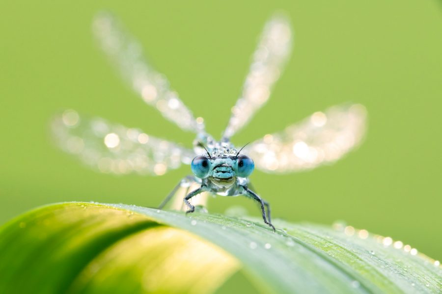Photography Ethics Freezing Insects For Macro Nature Ttl