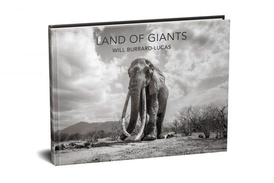 elephant queen will burrard-lucas