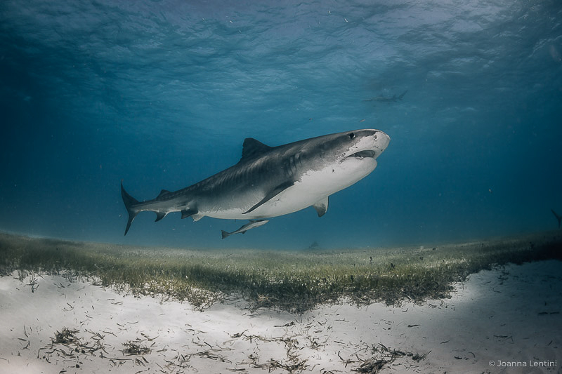 underwater photography locations