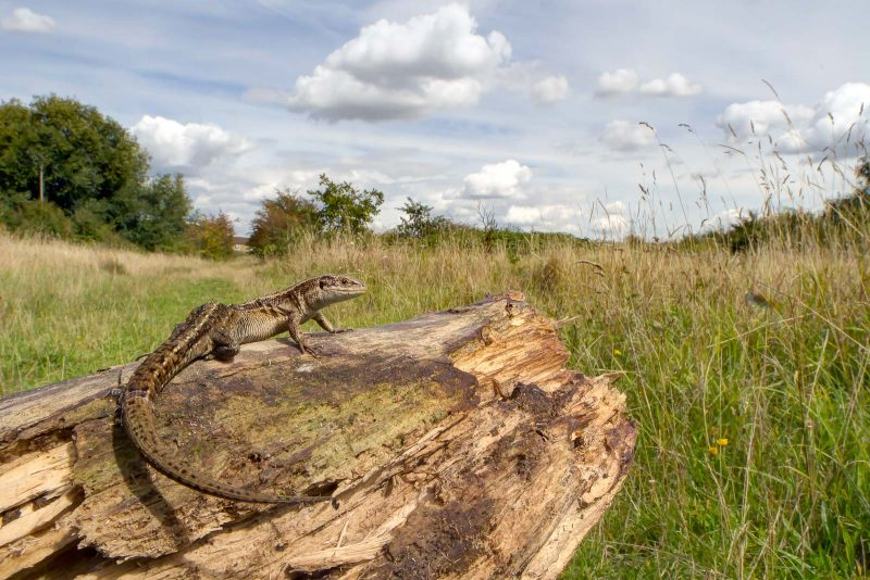 photograph-reptiles-uk