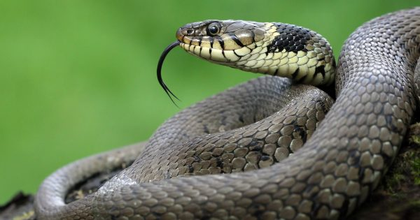 How to Photograph Reptiles in the UK