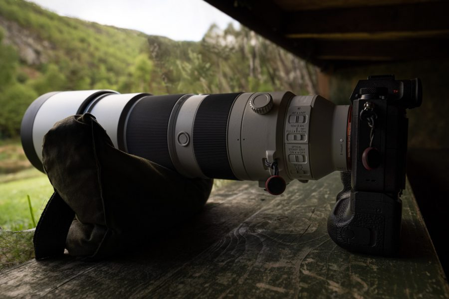 Sony 200-600mm Lens Review: Wildlife Photography Field Test