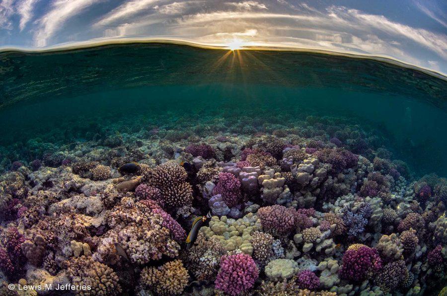 underwater photography tutorials