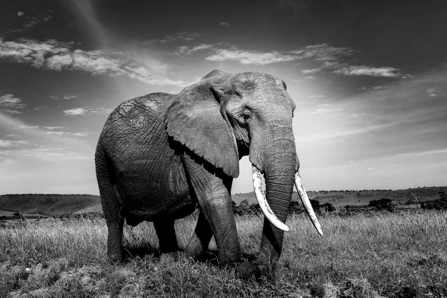 black-and-white-wildlife-photography