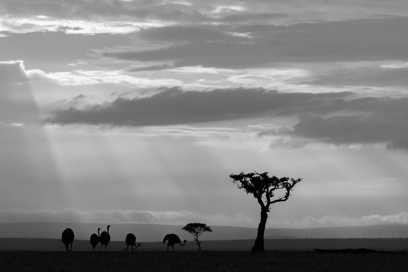 black and white wildlife photography