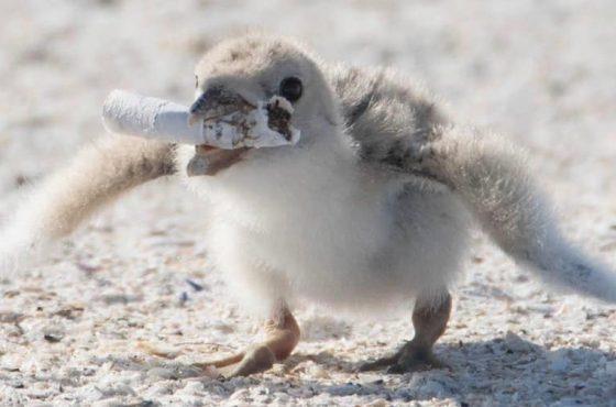bird-butt – 2