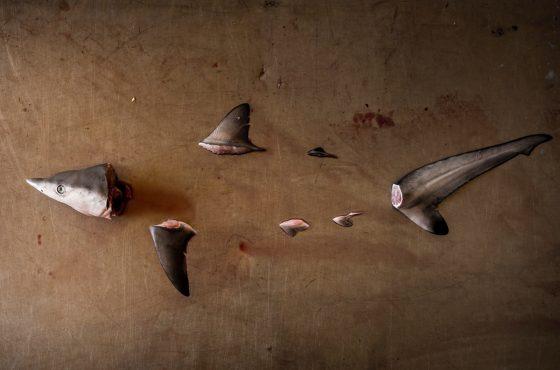 Sharks-Shin – 6