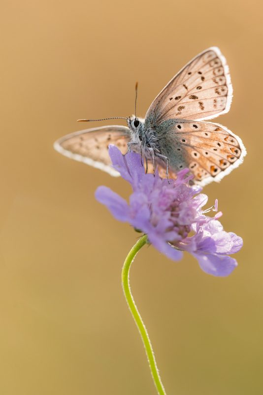 how to take better handheld photographs insects