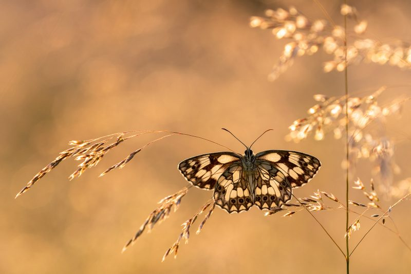 macro photography, butterfly