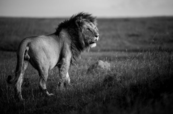 edit-black-and-white-wildlife-photographs-3
