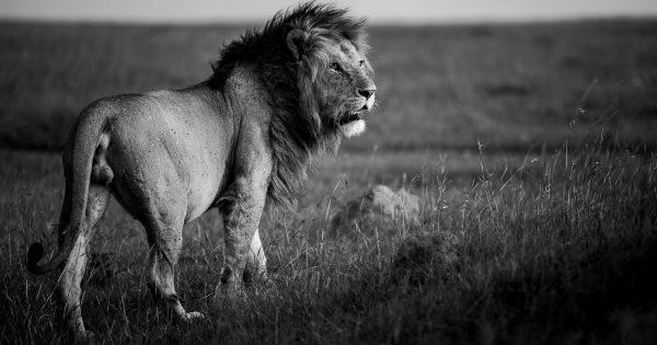 The Basics Of Editing Black And White Wildlife Photographs Nature Ttl