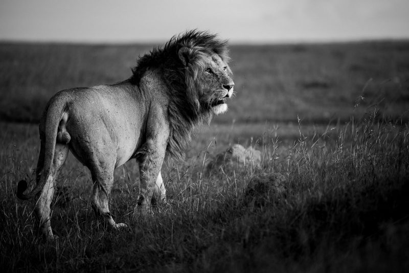 edit black and white wildlife photographs