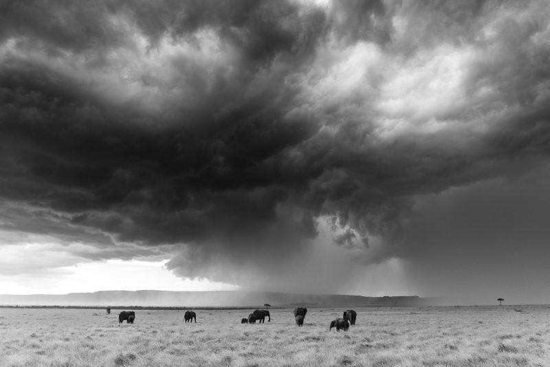Elephant landscape Black and White Edit