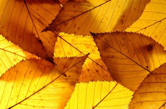 How-to-photograph-autumn-close-ups-3