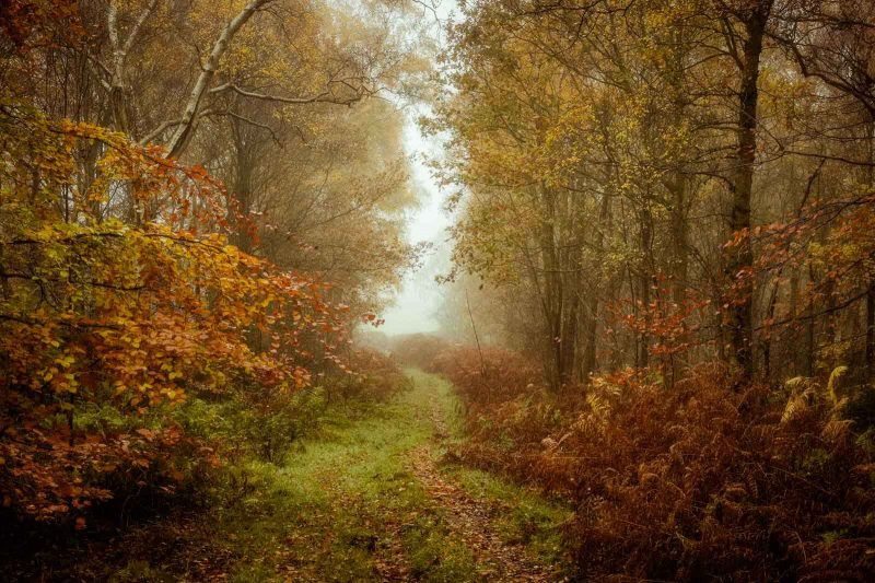Ideas for Autumn Landscape Photography - woodland