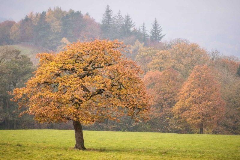 Ideas for Autumn Landscape Photography - autumn tree