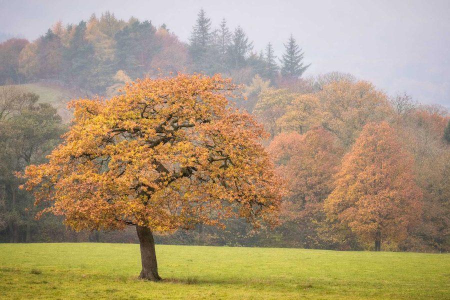 6 Ways To Take Better Autumn Landscape Photos Nature Ttl