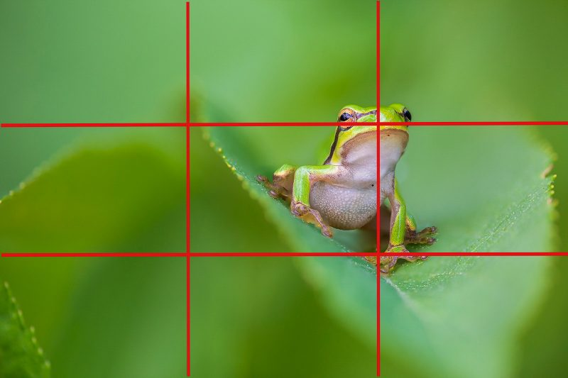 frog composition rule of thirds