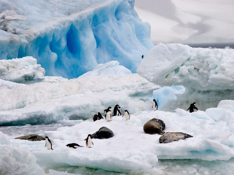 Icebergs, seals and penguins