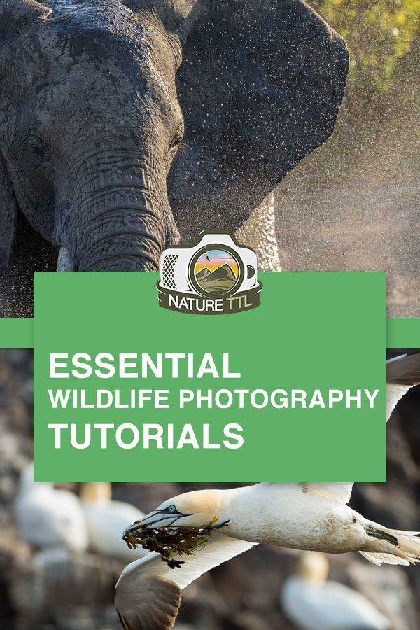 wildlife photography tutorials