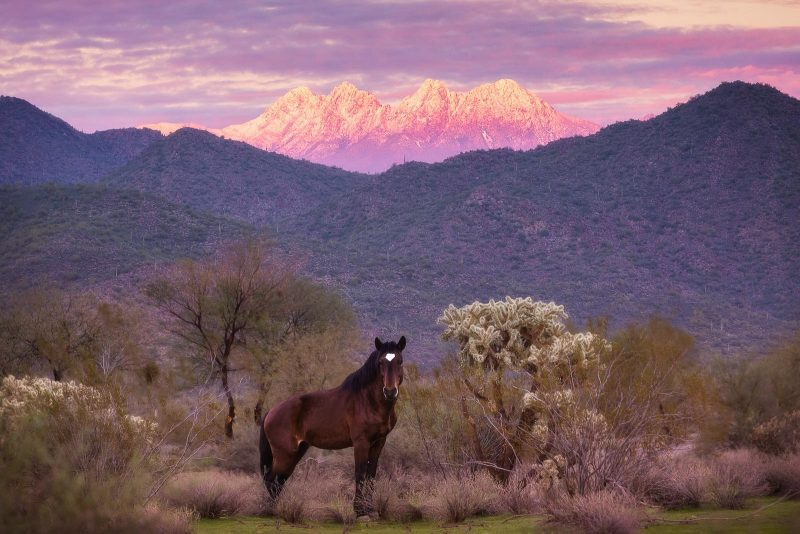 Photograph of a wild horse stood in the foreground of a landscape. Behind it are wooded hills and a mountain with purple light hitting it