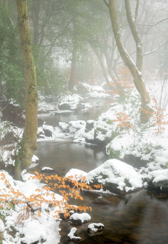 Woodland stream covered in mist and snow