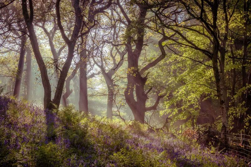Sun rays shining through mist in a woodland