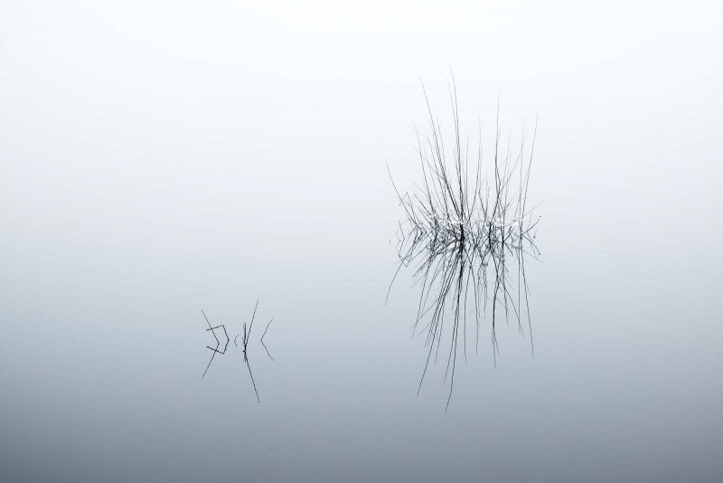 Minimal landscape photo of reeds with mist in the background blending into the water