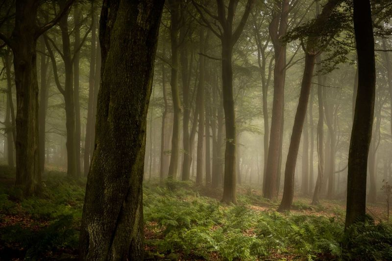misty woodland landscape