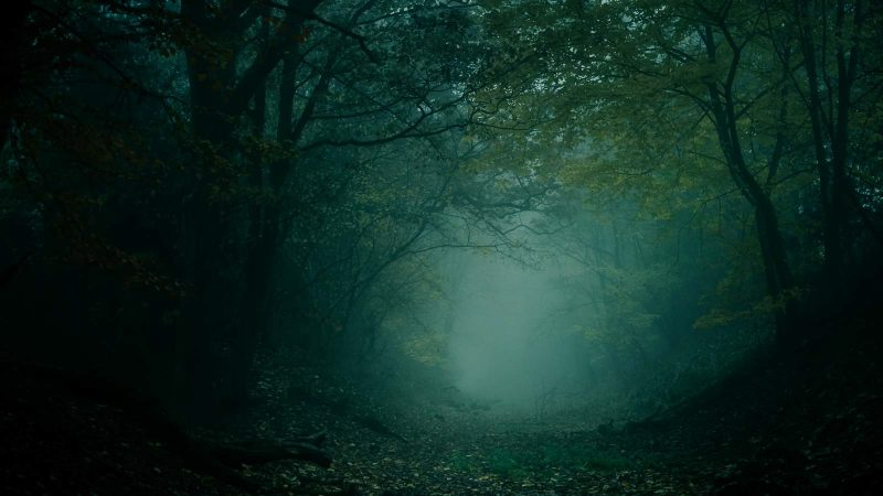 Mist in a dark, spooky woodland landscape