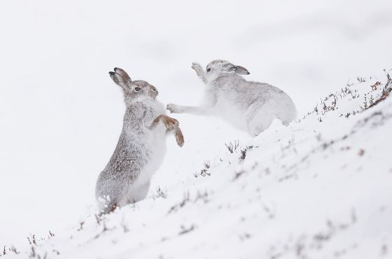 inspiration for winter wildlife photography-11