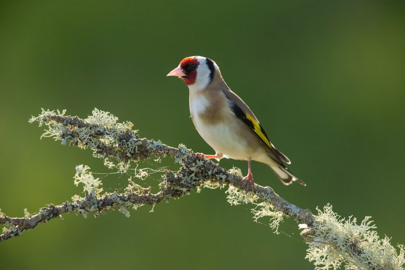 bird portrait photography tips